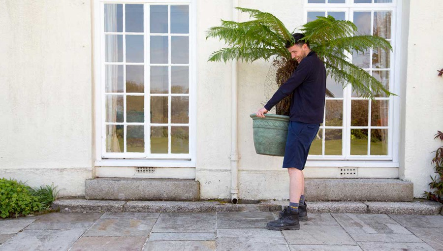 Tripp removals staff carry pot plants